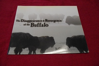 Image for The Disappearance & Resurgence of the Buffalo